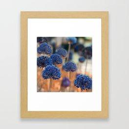 Blue ball flowers Framed Art Print