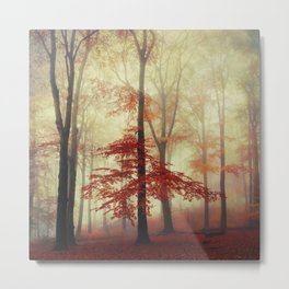 Fall in Red - Beech Tree with red foliage Metal Print
