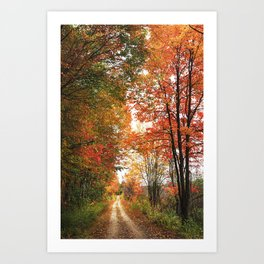 Trail in the woods in Autumn Art Print