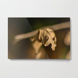 Oak tree leaf #1 Metal Print