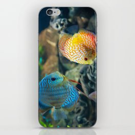 discus iPhone Skin