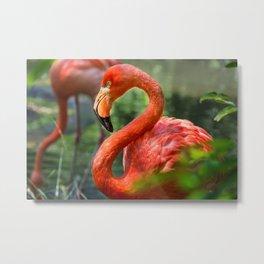 Pittsburgh Zoo - Flamingo Metal Print