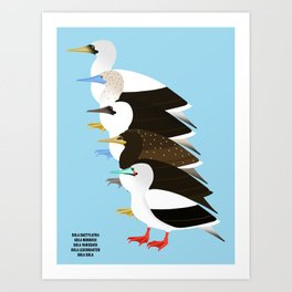 Booby Birds Art Print
