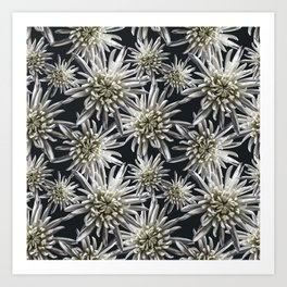 Mum Floral Pattern - Mum's the word - Black and White Floral Design - White Mum Flowers - I Love my Art Print