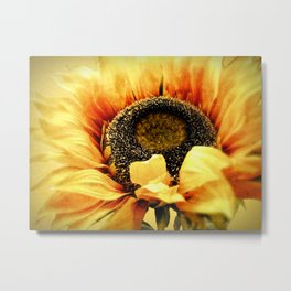 Sunflower A203a Metal Print