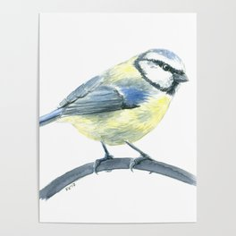 Blue tit, watercolor painting Poster
