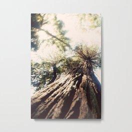 Too Tall Tree Metal Print