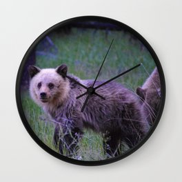Grizzly bear cub in Jasper National Park   Alberta Wall Clock