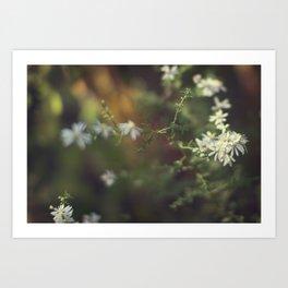 autumn white Art Print
