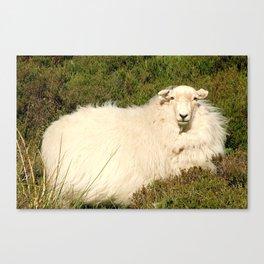 I See Ewe Canvas Print