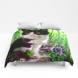 Orazio and the princess frog Comforters