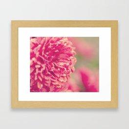 Red Chrysanthemums Framed Art Print