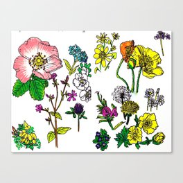 Scottish Summer Wildflowers Canvas Print