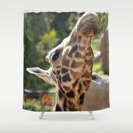 Baringo Giraffe Shower Curtain
