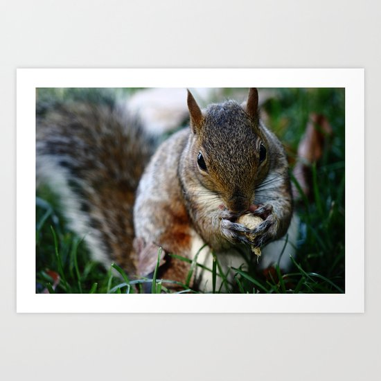 Squirrel Food Art Print