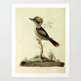 """Great Brown King's Fisher"" by Sarah Stone, 1790 Art Print"