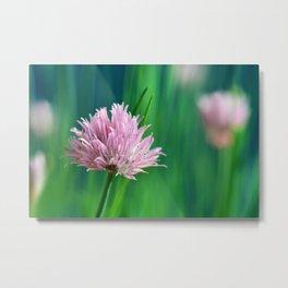 Allium pink 076 Metal Print