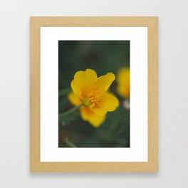 California Poppy Open Framed Art Print