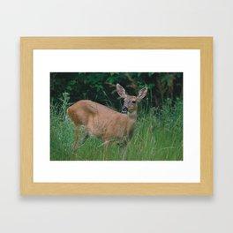 Doe a Deer Framed Art Print