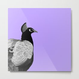 Colorless peacock Metal Print