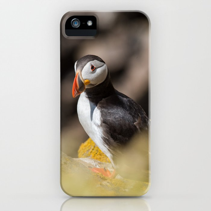 Puffin from Ireland (RR 284) iPhone Case