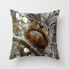 Jeronimo Rubio Photography | Peanut the Squirrel | I See You Throw Pillow