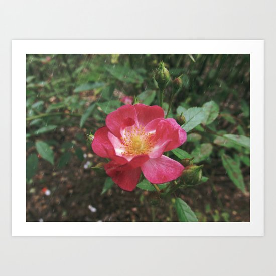 A rose must remain with the sun and the rain Art Print