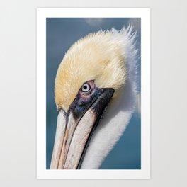 Brown Pelican Portrait Art Print