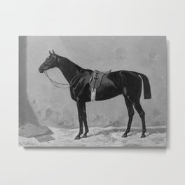 Black saddled thoroughbred horse in stable Metal Print