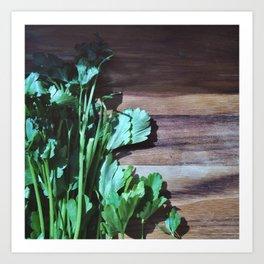 Herbs   Parsley  Art Print