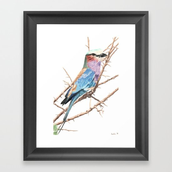 Lilac breasted roller Framed Art Print