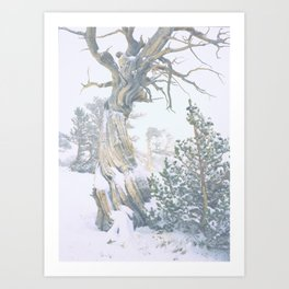 Ancient Tree, Twisted in the Wind/Windy Ridge, Colorado Art Print