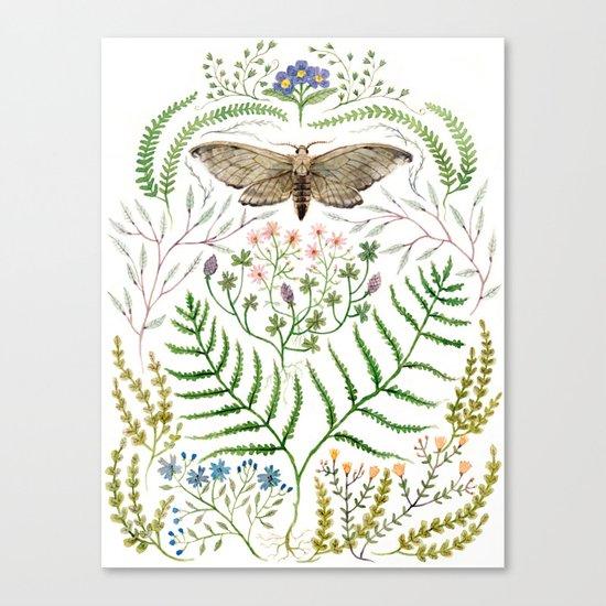Moth with Plants II Canvas Print