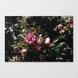 Wilting Canvas Print