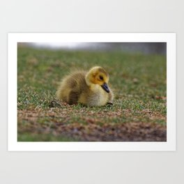 Sleepy Gosling Art Print