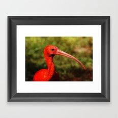 Ibis Profile Framed Art Print