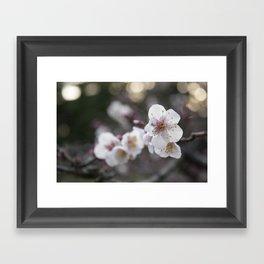 The Early Cherry Blossom Framed Art Print