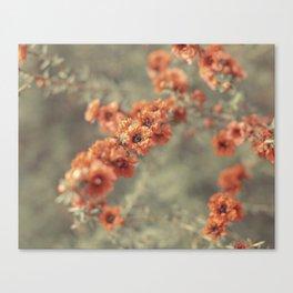 Tea Blossoms Canvas Print