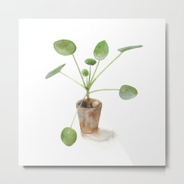 Pilea. Chinese money plant. Metal Print