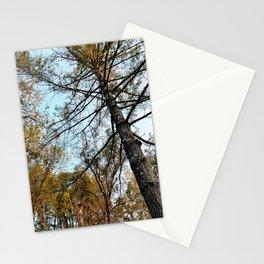 Virginia Woodland Pines Stationery Cards