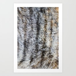 Furry Art Print