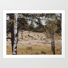 Rocky Mountain Elk Art Print