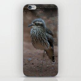Bush Stone-Curlew iPhone Skin