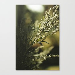 Wormwood Canvas Print