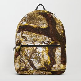 Angel Oak 5 Backpack