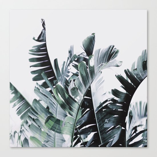 Litsia Leaves Darker Canvas Print