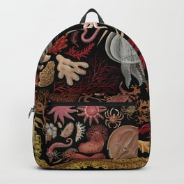 Intertidal Life of the North Atlantic (with species list) Backpack