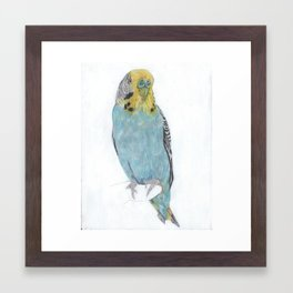 Budgie, commission Framed Art Print