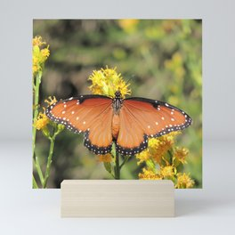Queen Butterfly on Rubber Rabbitbrush in Claremont CA Mini Art Print