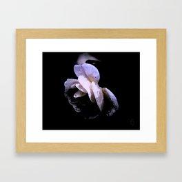 La Rosa de la Noche Framed Art Print